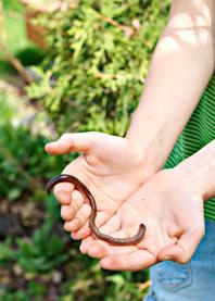 Regenwurm in einer Kinderhand
